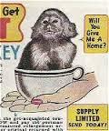 Teacup Monkey -